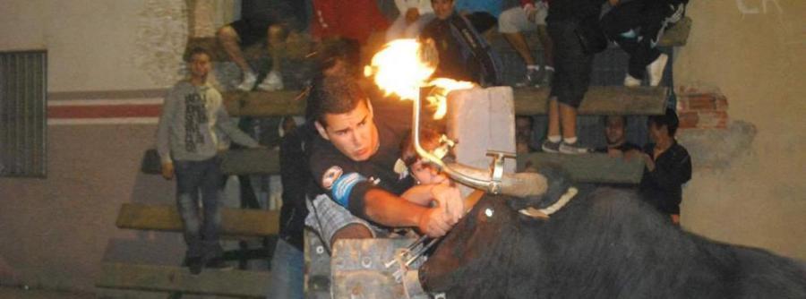 Animales Animales Aragón prohíbe herir a las reses en festejos populares y permite el toro de fuego, ensogado y engamellado