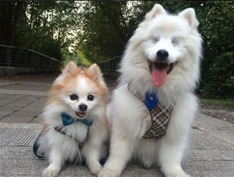 Animales Animales La entrañable amistad entre un perro ciego y un cachorro guía