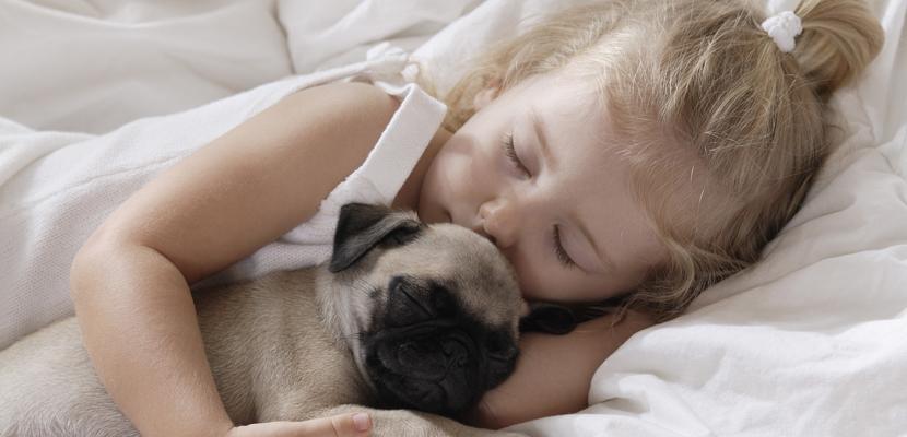 Animales Animales Beneficios de dormir con el perro