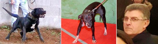 Animales Animales Los 230 'gladiadores' caninos de Ángel Ortega