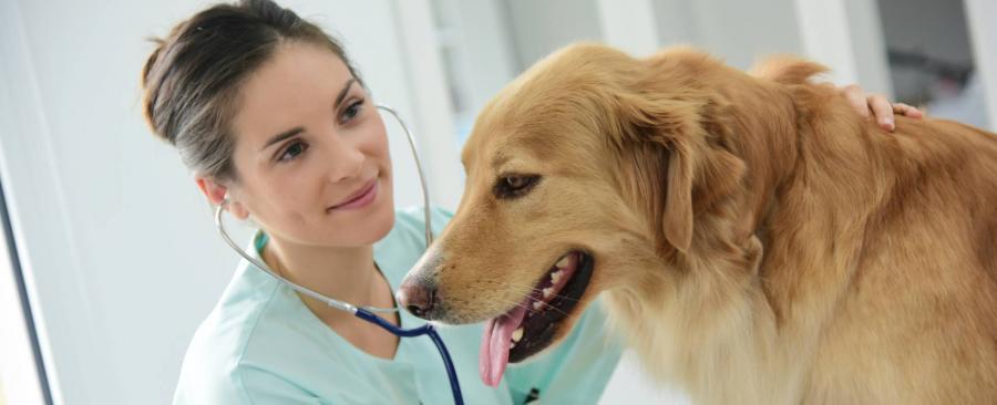 Animales Animales ¿Tu mascota no tiene un seguro veterinario? Pues ya estás tardando